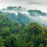Convido Corporate Housing recommits to the Rainforest Trust